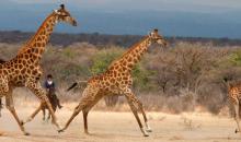 Safari & Comfort