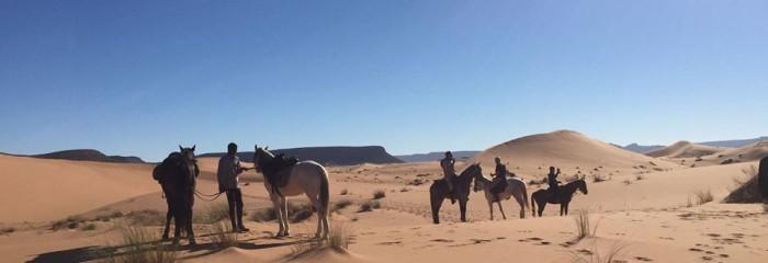 Horses, Dunes & Nomads