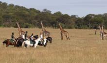 La Grande Migrazione del Serengeti